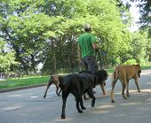 foto of dog-walker  - dog walker in nyc
