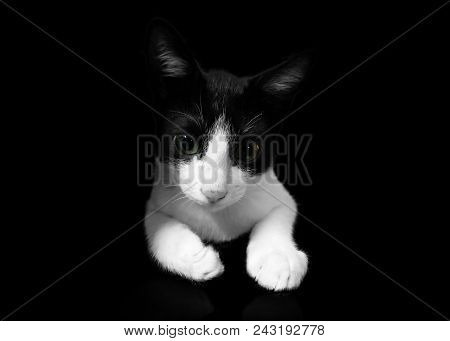 poster of Black Cat On Black Background, Cropped Shot.cute Tuxedo Cat With Funny Face.tuxedo Cat Over Yellow B