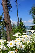 Daisy's in Stanley Park; Vancouver; Canada