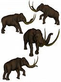 Set Of Four Mammoths.