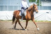 Training In Horse Riding, Entry Level. Overcoming A Horseman On A Bay Horse Obstacles - Cavaletti On poster