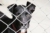 Black pup in a pen