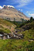 Alpine Creek