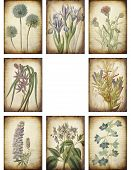 Vintage Botanical Backgrounds