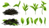 Close Up Realistic Tea Dried Herbs And Greens Tea Leaves Isolated Vector Set. Tea Green Herb Natural poster