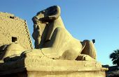 The Head Sphinx