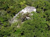 One Maya Temple Lost In The Rainforest