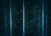 Pine Dark Night Creepy Forest Boondocks. Photo Depicting Dark Misty Pine Tree Backwoods. poster