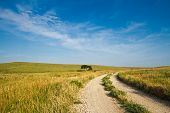 foto of tallgrass  - A gravel road going through the Flint Hills of Kansas - JPG