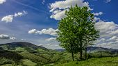 Lonely Trees In Carpathian Mountain Highland Meadow Scenery Landscape Photography From Ukraine poster