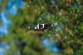 Four-propeller Drone Flying In Nature Against The Green Nature. The Maneuver. Blurred Background. Cl poster