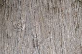 Tree Trunk Wood Background, Old Weathered Gray Color Wooden Stump poster