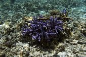 Acropora Coral View In The Sea poster