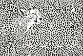 Pattern cheetahs background