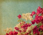 Bush of Bougainvillea flowers   in retro style