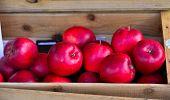 Fresh Apple Fruits For Sale At Street Market poster