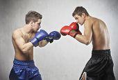Постер, плакат: Два молодых боксеров обращенных друг к другу в матче