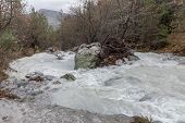 A Small, Mountain, Cold, Fast River Flows Among The Forest On A Overcast, Winter Day (greece, Pelopo poster
