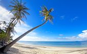 picture of por  - Palm trees on the Bang Por beach sand on tropical resort Koh Samui Thailand - JPG