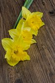 foto of jonquils  - Closeup detail of yellow jonquil flowers on wooden background - JPG