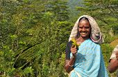 LABOKELLE, SRI LANKA - APRIL 10 - 2012, Unidentified female tea picker holds a plant and smiles.