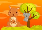 Kangaroo and Koala