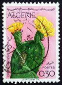 Postage Stamp Algeria 1969 Opuntia Ficus Indica, Cactus