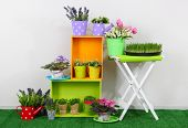 Beautiful colorful shelves and table with decorative elements standing on grass