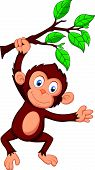 picture of chimp  - Vector illustration of Cute monkey cartoon hanging - JPG