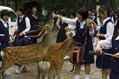 High School Girls Feedeing Deer On June 18, 2010 In Nara, Japan.