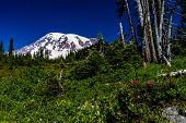 A Beautiful View of Mount Rainier, Washington, USA