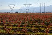 Electrical Transmission Towers and Lines