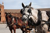 stock photo of blinders  - Pair horses with coach against ancient palace on Plaza de Espana Seville Spain