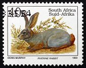 Postage Stamp South Africa 1993 Riverine Rabbit