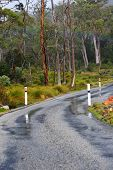 foto of slippery-roads  - A slippery and dangerous bend on a wet forest road in tasmania - JPG