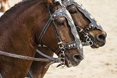 stock photo of chariot  - Horses - JPG