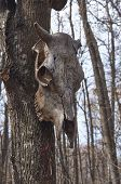 picture of pagan  - Wild bull skull on a place of worship of pagan gods - JPG