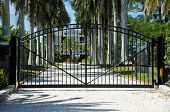 image of driveway  - Iron Security Gates Protecting the Entrance to a Palm Tree Lined Driveway - JPG