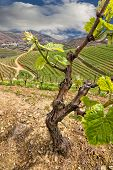 Valley of the Vineyards