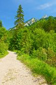 stock photo of pieniny  - Hiking trail in The Pieniny Mountains - JPG