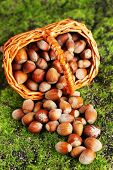 Hazelnuts in wicker basket, on green grass background