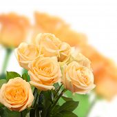 Bouquet of beautiful roses on light background