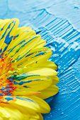 Gerber flower with blue paint