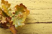 Leaves on yellow wooden background