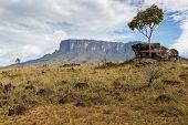 Track To Mount Roraima - Venezuela, South America