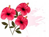 Background with a bunch of pink flowers. Vector.
