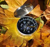 Compass Among The Autumn Leaves.
