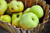Antonov Apples.