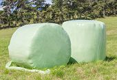 Bales Of Green Crop Silage, Wrapped Up For Storage.