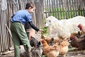 stock photo of farm animals  - Little farm boy feeding the chickens and the goat in the countryside - JPG